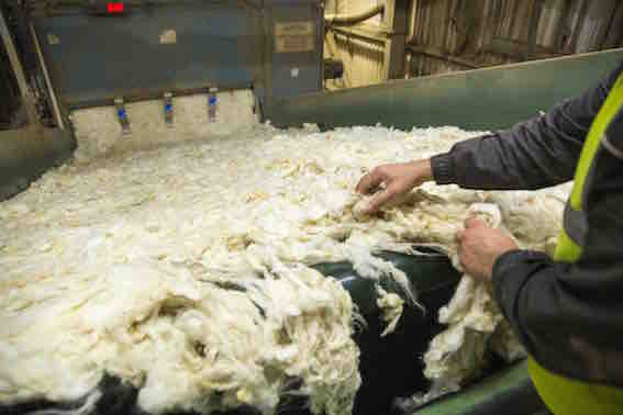 Rohstoff Wolle