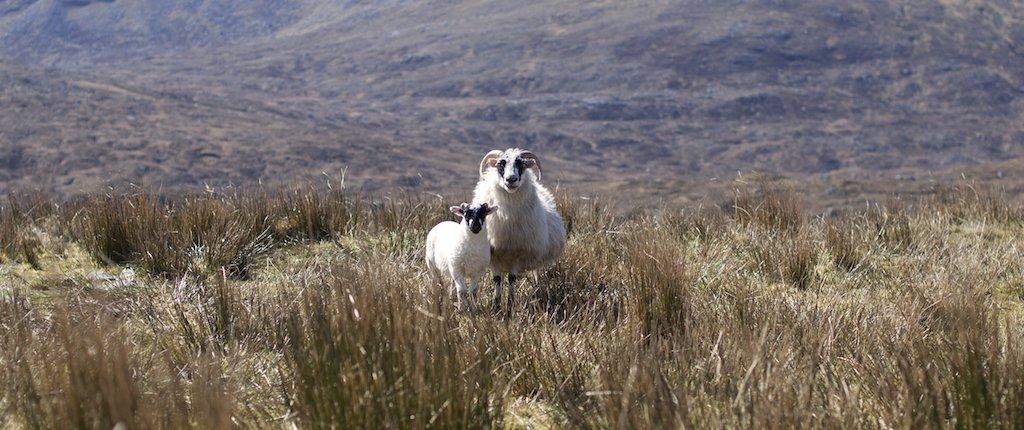 Harris Tweed: der Klassiker von schottischen Inseln